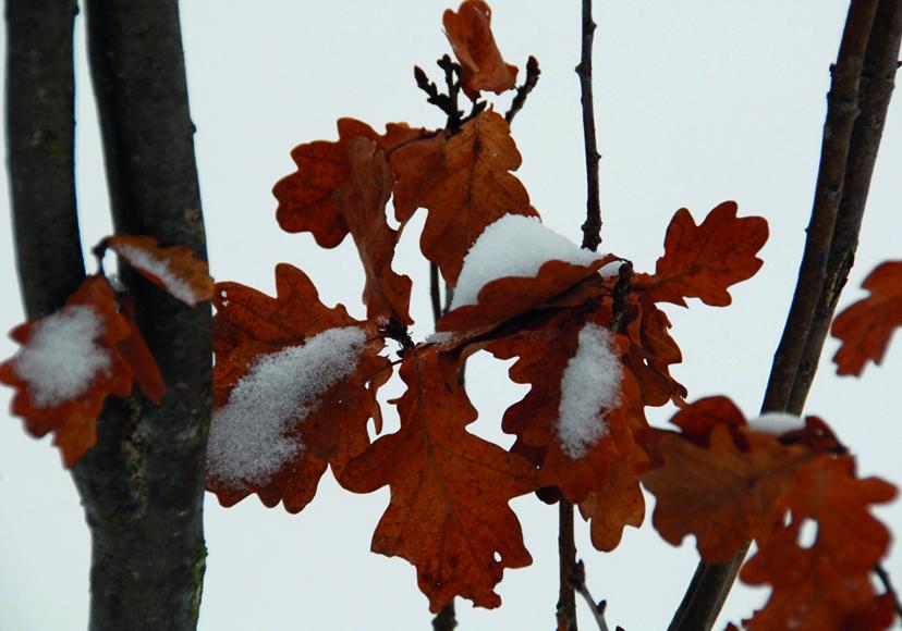 winterharter_Baum.jpg